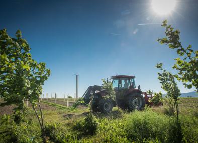 Badische-Trüffel-Traktor